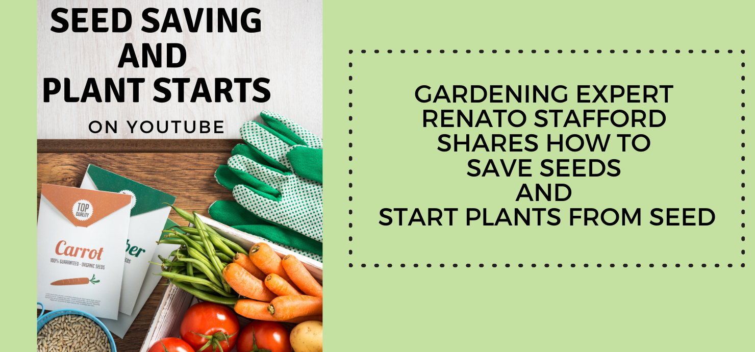 "Slideshow image that reads ""Seed saving and plant starts on YouTube: Gardening expert Renato Stafford shares how to save seeds and start plants from seed."""